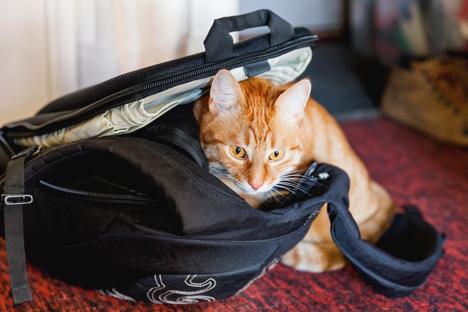 Cat in a black bag.